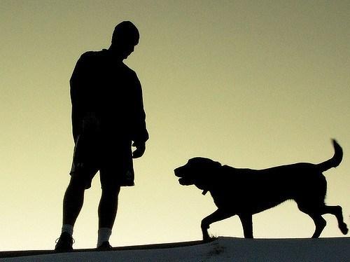 11 Best Running Dogs